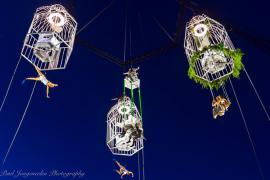 (c) Paul Jongeneelen Photography